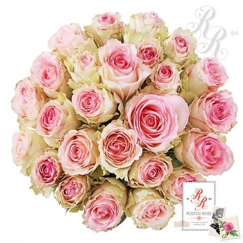 Букет 21 бело-розовая роза (Зквадор)