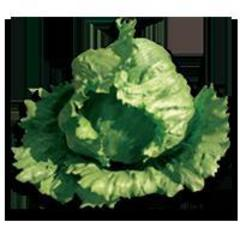 Шелли семена салата айсберг, (Hazera / Хазера)