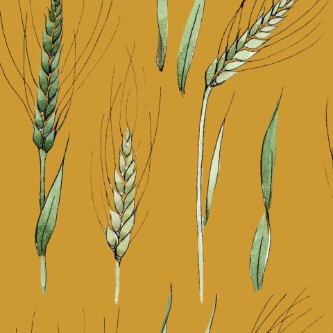 акварель №10 пшеница