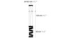 Ilfari 6390s — Потолочный подвесной светильник SECRET CLUB H1