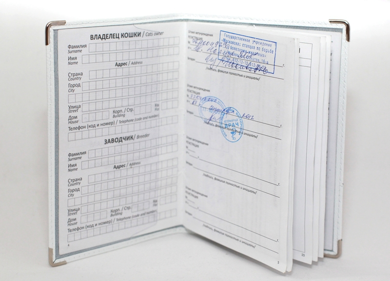 французский бульдог паспорт