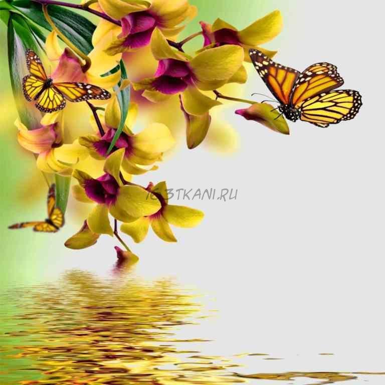 Бабочка 4.1