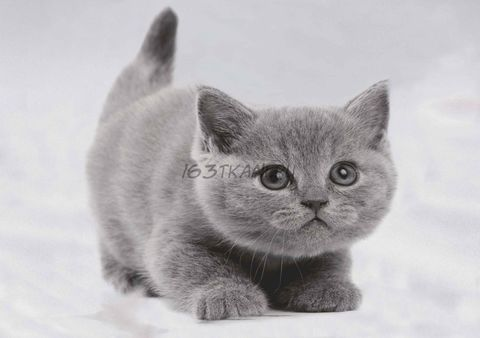 Котенок 2