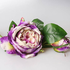 Роза пионовидная бело-фиолетовая 3-571