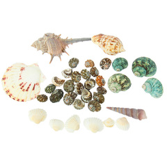 Набор ракушек для песочницы