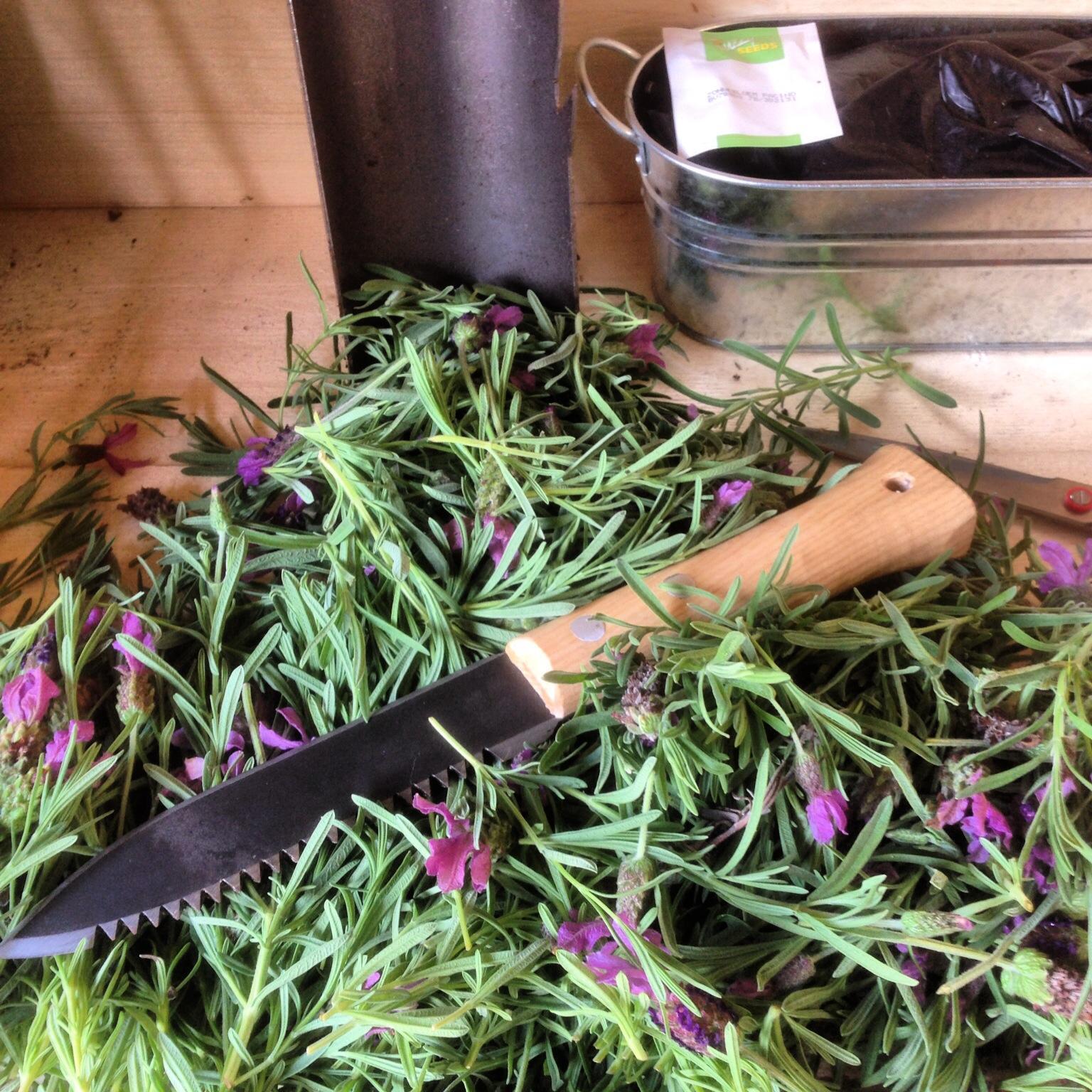Нож Hori-Hori для деления растений с зазубренным лезвием DeWit