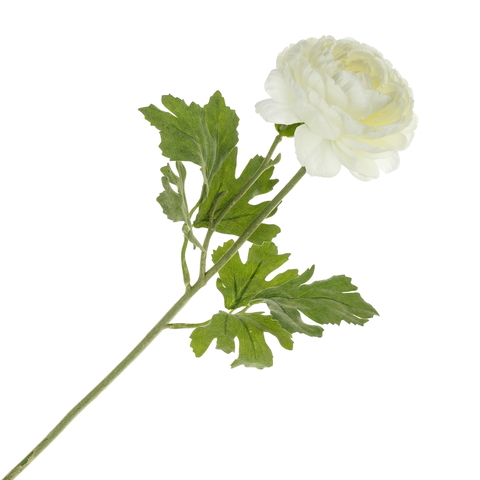 Лютик белый  48 см