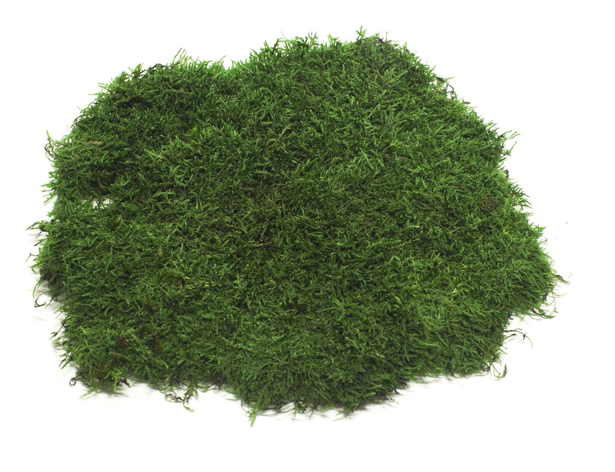 Стабилизированный мох пластами