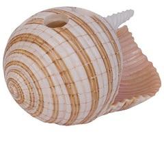 Стакан для зубных щеток Blonder Home Sea Breeze