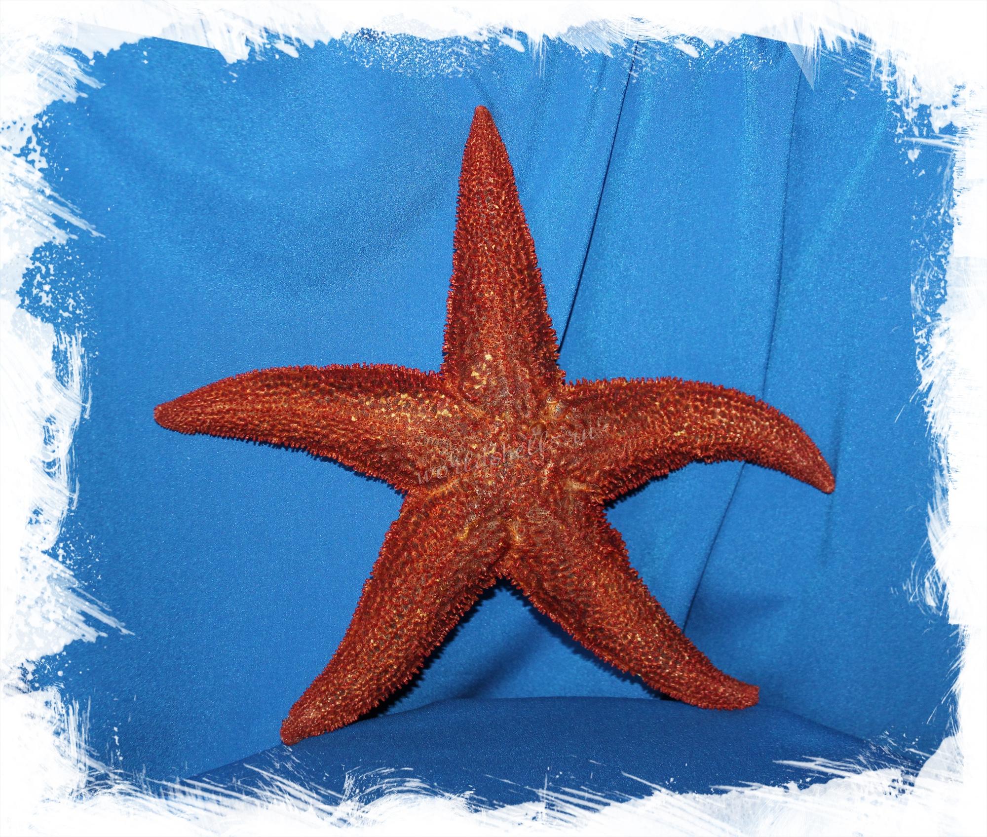 Поздравление от морских звезд