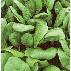 Аполло семена шпината, (Sakata / Саката)
