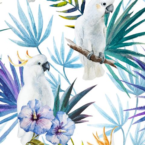 White Tropics
