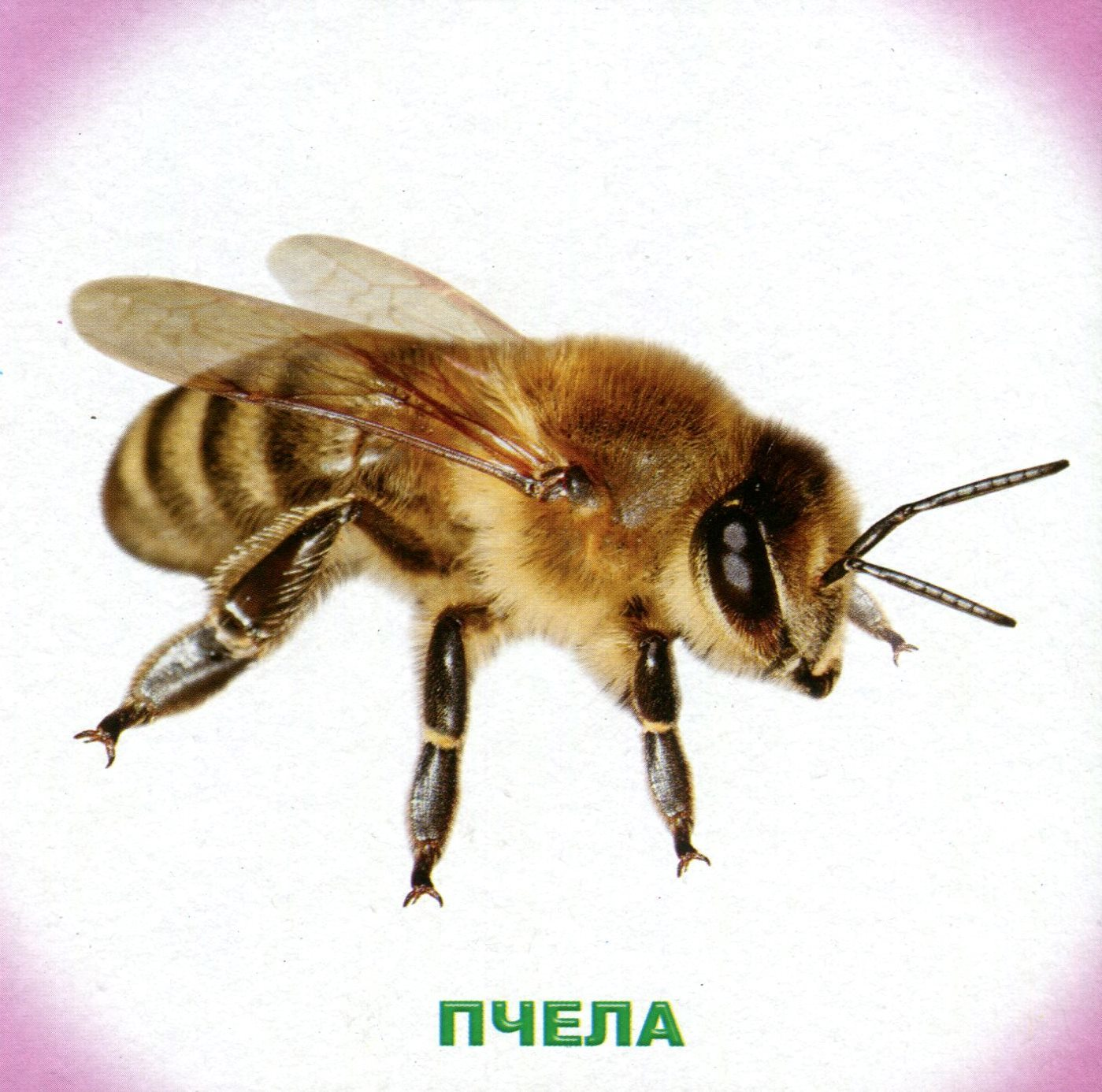 Картинки с надписями насекомых