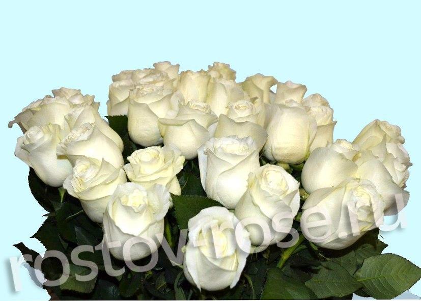 Букет 21 белая роза (Эквадор)