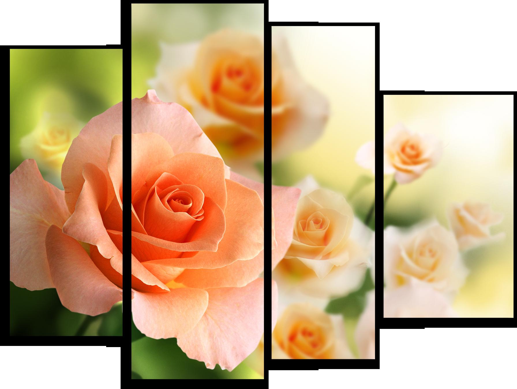 """Цветы Модульная картина""""Персиковые розы"""" М305.png"""