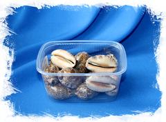 Ципрея Арабика морские ракушки