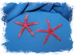 Красная морска звезда Фингер