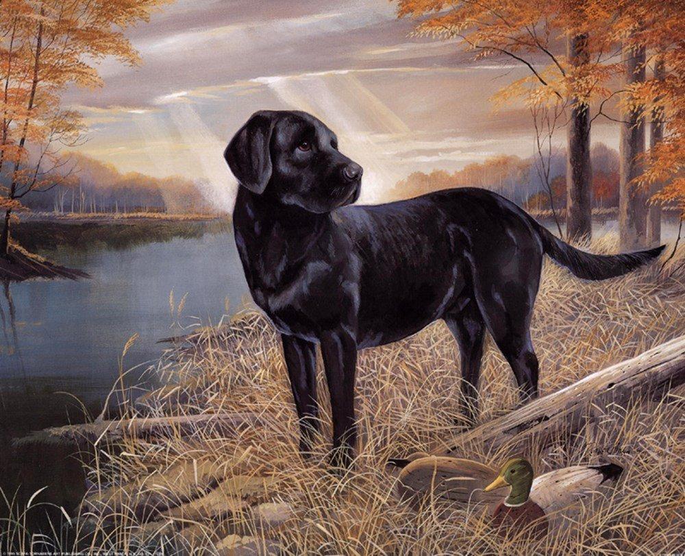 Картина раскраска по номерам 50x65 Черный лабрадор– купить ...