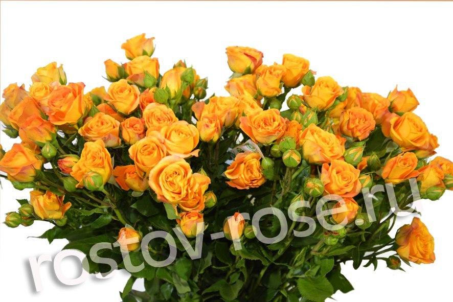 Букет кустовых роз Абеба