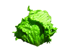 Ярдена семена салата айсберг, (Hazera / Хазера)