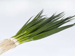 Эстафет F1 семена лука на перо, (Takii / Таки)