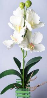Орхидея с корнями кремовая 6-278