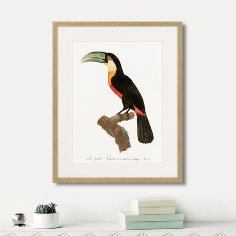 Франсуа Левальян - Beautiful toucans №1, 1806г.