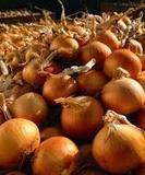 Лук репчатый 1 кг. (урожай 2019 года) от Ирины Верхотуровой