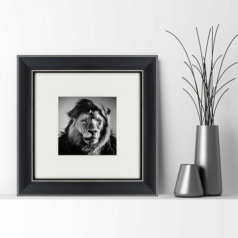 Лоран Бахо - Портрет льва, Кения