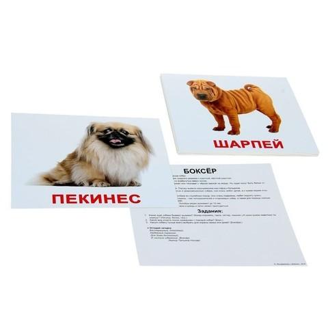 Развивающие Карточки «Породы собак» 1+