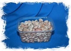 Ракушки Умбониум для мозаики