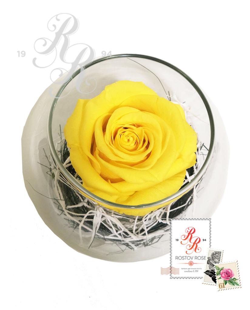 Роза желтая в бокале
