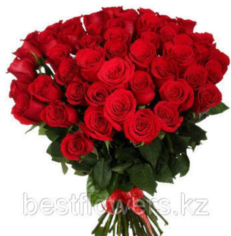Букет из 51 Голландской красной розы (70 см)