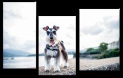"Модульная картина ""Взгляд собаки"""
