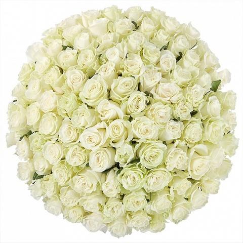 Букет 101 белая роза в шляпной коробке