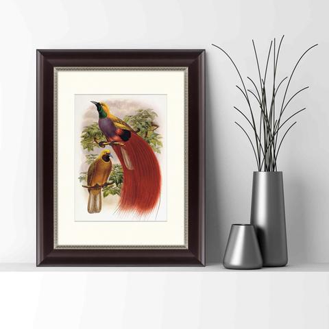 Даниэль Жиро Эллиот - Гольдиева райская птица, 1884г