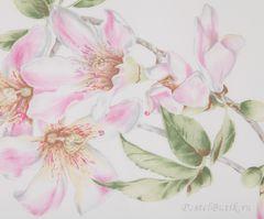 Постельное белье 2 спальное евро макси Mirabello Chorisia розовое