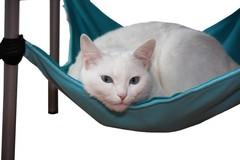 Гамак для кошки бирюзовый GK1BG