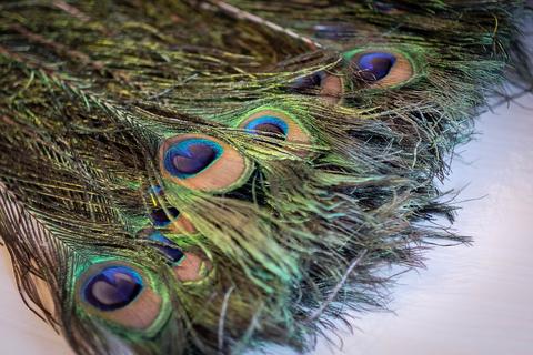 Перья павлина  декоративные ,  01 натуральный (длина 70-100 см.)цена за 10 штук.