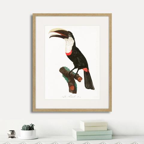 Франсуа Левальян - Beautiful toucans №2, 1806г.