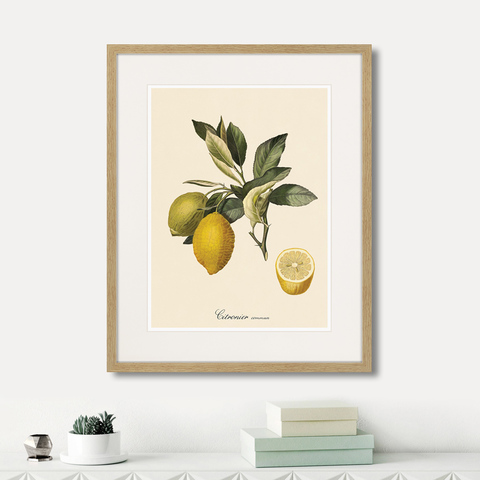 Уолтер Гуд Фитч - Juicy fruit lithography №3, 1870г.