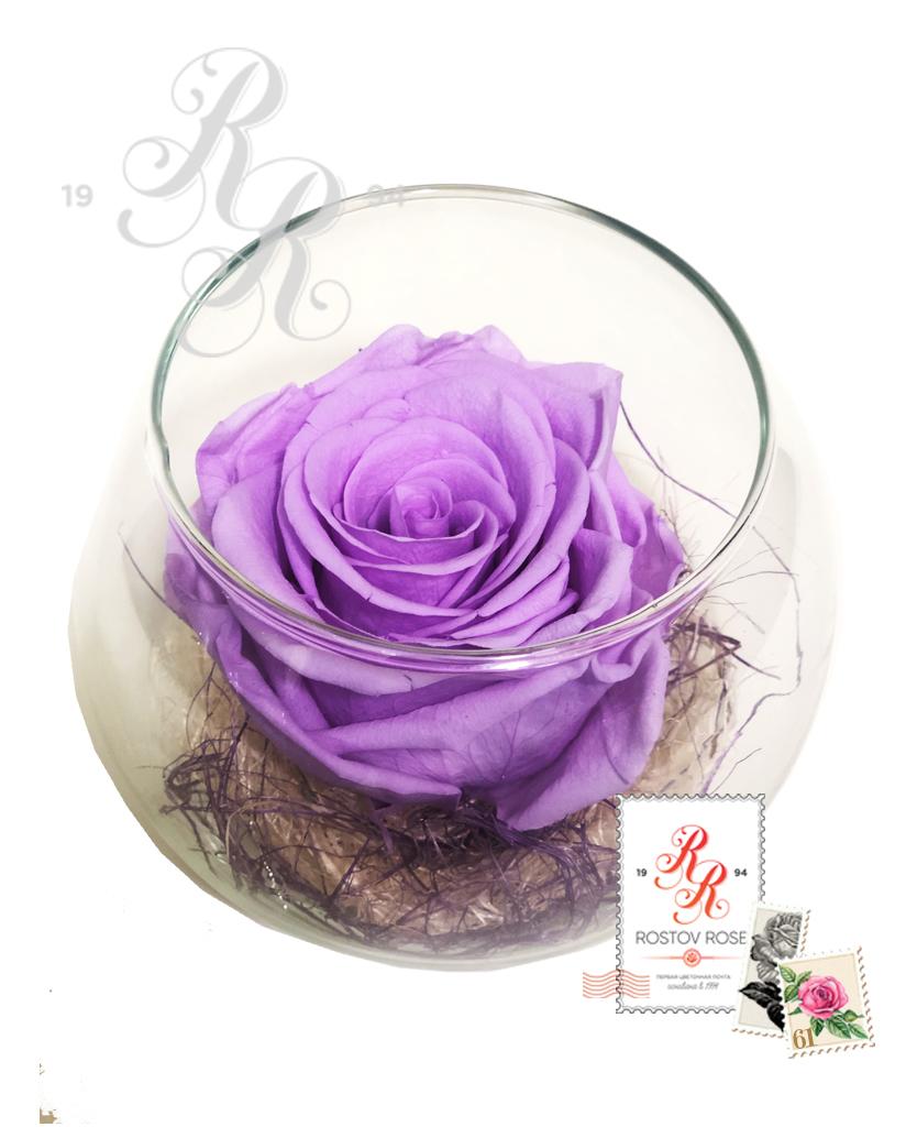 Роза фиолетовая в бокале