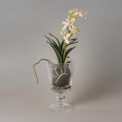 Орхидея в стакане  90649-05