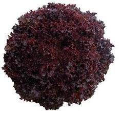 Бакус семена салата листовой, (Vilmorin / Вильморин)