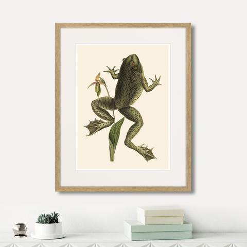 Марк Кейтсби - Big jumping frog, 1745г.