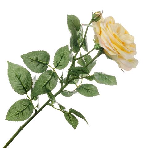 Роза светло-жёлтая 66см