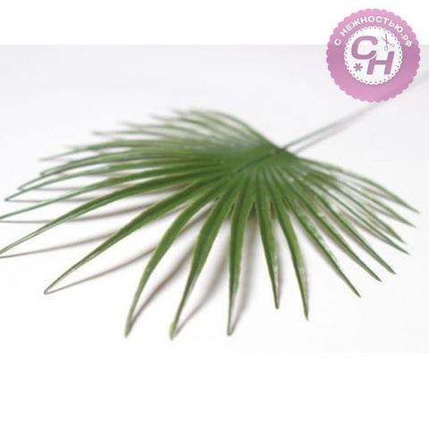 Лист пальмы круглый 32 см.