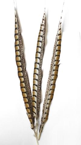 Перо фазана ,  длина ок. 50-60 см. (выбрать цвет)