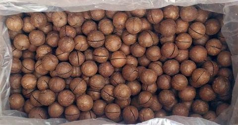 Макадамия в скорлупе 4900 гр