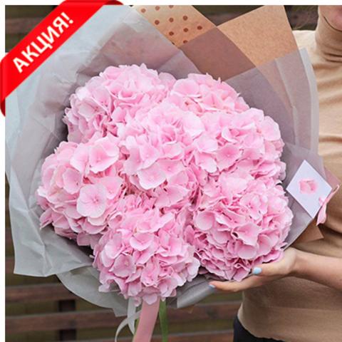 Гортензии розовые от 3шт